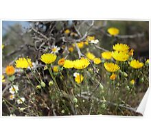 High Desert wild Flowers 2 Poster