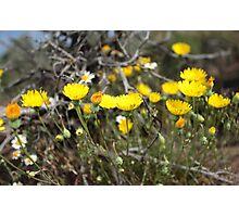 High Desert wild Flowers 2 Photographic Print