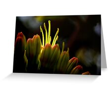 Agave Dance Greeting Card