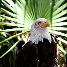 Portrait of Freedom by Blaze66
