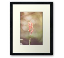 Dream Flower 37 Framed Print