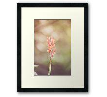 Dream Flower 37 Framed Print
