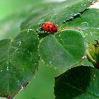 Bug 2 by saseoche