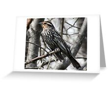 Female Yellow Headed Blackbird Greeting Card
