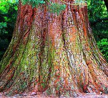 The Memory of Trees by Wayne Gerard Trotman