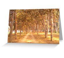 A Golden Walk... Greeting Card