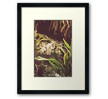 Dream Flower 40 Framed Print