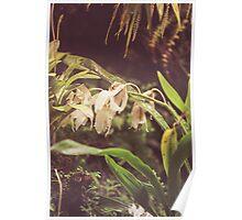 Dream Flower 40 Poster