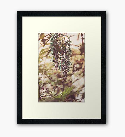 Dream Flower 41 Framed Print