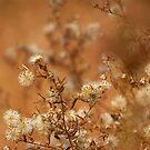 A Golden Blend by Brian Gaynor