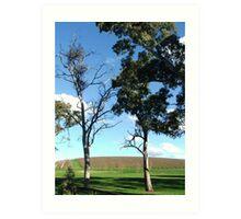 Vineyard View Art Print