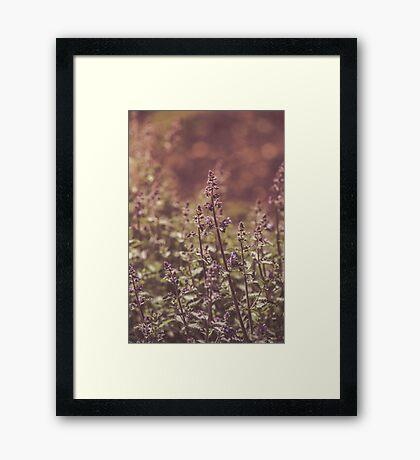 Dream Flower 42 Framed Print