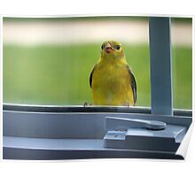 Little Bird on the Window Sill Poster