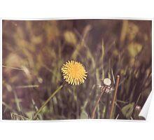 Dream Flower 43 Poster