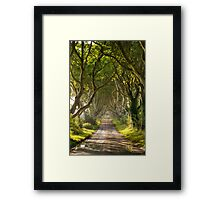 The Dark Hedges Framed Print
