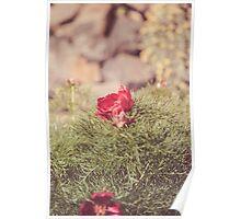 Dream Flower 45 Poster