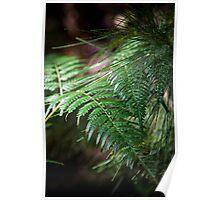 Rainforest light Poster