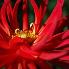 Dancing Dahlia by Lozzar Flowers & Art
