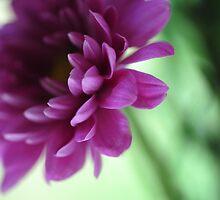 La Fleur de l' Amour by JennyRainbow