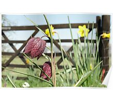 Snakesheads and Daffodils Poster