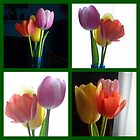 Candy Coloured Tulips X 4 by goddarb