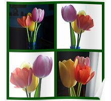 Candy Coloured Tulips X 4 Poster