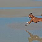 Dog frollicking at Ocean Beach California by milton ginos