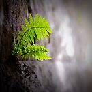 Green II by trbrg