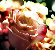 Pink Rose in Sparkling light by bloomingvine