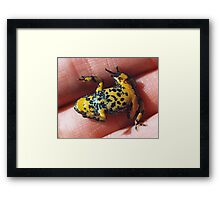 Cool Fire-Bellied Toad Framed Print