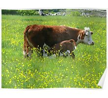 Buttercups & Cows Poster