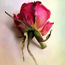 Painterly Rose by Jessica Jenney