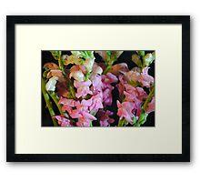 Pink Snapdragons Framed Print