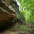 Devil's Standtable Nature Trail #1 by Daniel Owens