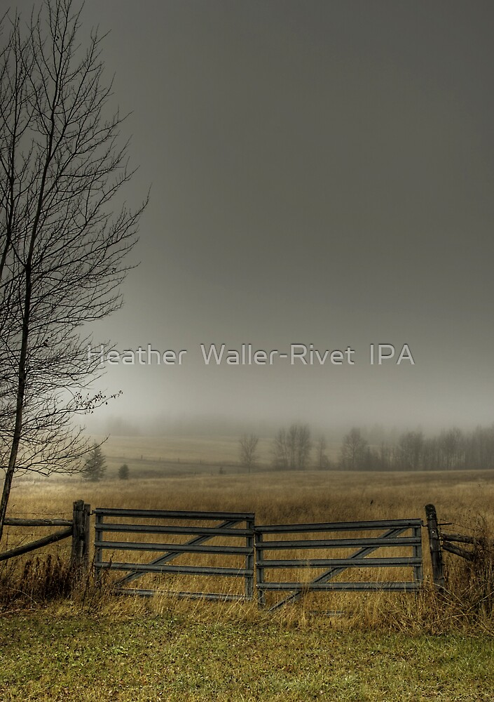 Autumns Pasture by Heather  Waller-Rivet  IPA