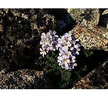 Alpine queen Photographic Print