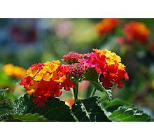 Rainbow Petals Photographic Print