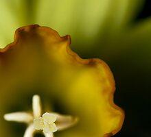 Daffodil by kaotiksymphony