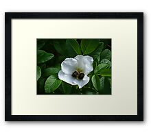 sisterly sharing Framed Print