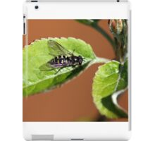 Close up of yellow and black insect on leaf iPad Case/Skin