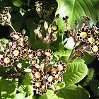 Miniature Flowers by Kate Hoppe