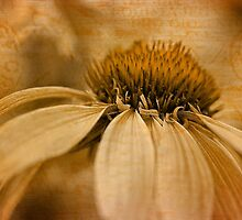 Golden memories by PhotosByHealy