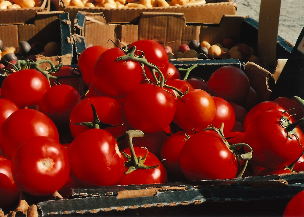 Tomatoes by rachelbee