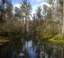 Florida wetlands in winter by David Lee Thompson