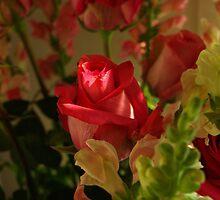 Light on the Petals by Barbara Gerstner