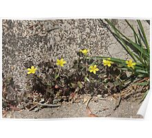 Yellow Flowers at the Steps Poster