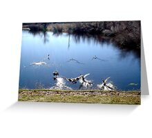 geese in a pond Greeting Card