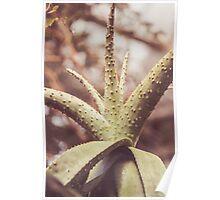 Dream Flower 47 Poster