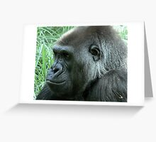 Gorilla at Melbourne Zoo Greeting Card