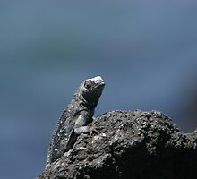 Lizard in the Galapagos by KristyWalker